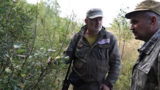 Охота на лося во время гона видео
