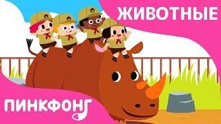 Зоопарк | Песни про Животных | Пинкфонг Песни для Детей