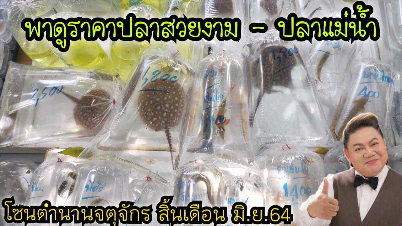 พาดูราคาปลาสวยงาม - ปลาแม่น้ำ . โซนตำนานริมทางเดิน .. เจอ อ.ยิ่งศักดิ์ มาตามหา กระเบน กระโห้ไทย