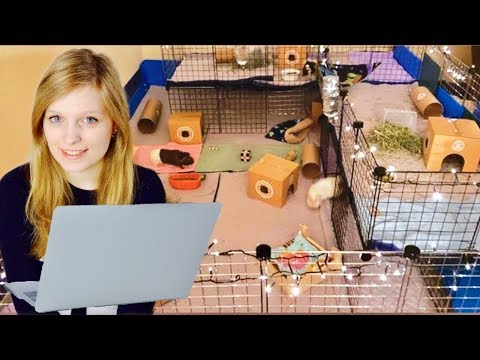 Reacting To My Subscribers Guinea Pig Cages