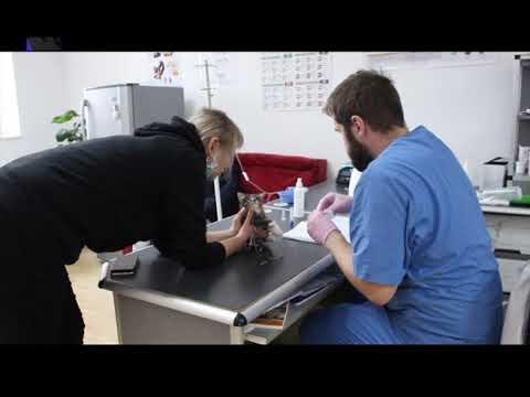 ТРК РАІ: Жителька Івано-Франківська продає свої картини, аби допомогти безпритульним тваринам