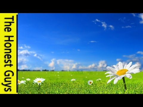 "GUIDED MEDITATION - ""The Summer Meadow"""