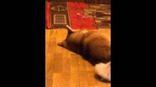 Собака из кино:Хатико не судите моё превое видео.