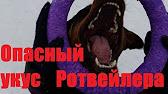 Питомник дьяково городище немецкая овчарка брюссельский грифон бельгийский гриффон пти брабансон йоркширский терьер щенки вязка.