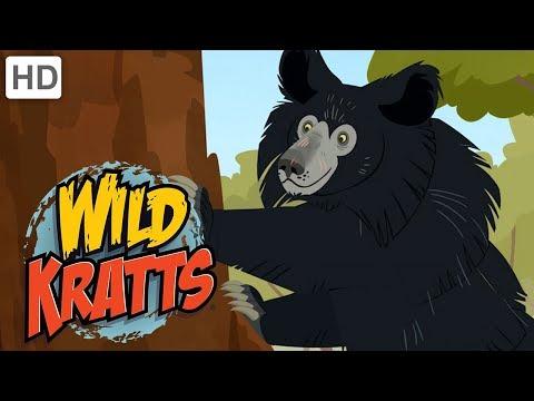 Wild Kratts - What is a Sloth Bear? (Season 5 Clip!) | Kids Videos
