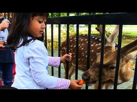 Kasih Makan Rusa Dan Keliling Kebun Raya Bogor