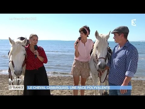 élevage de chevaux camarguais