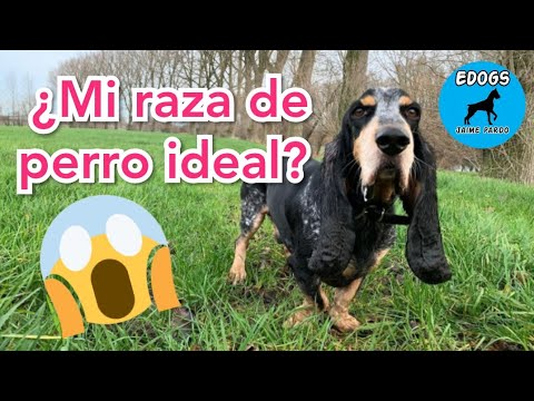 MI RAZA DE PERRO IDEAL - TEST