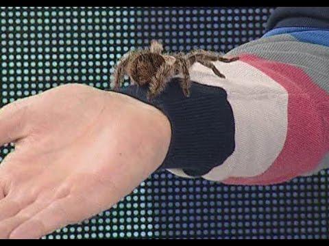 Как ухаживать за пауком?