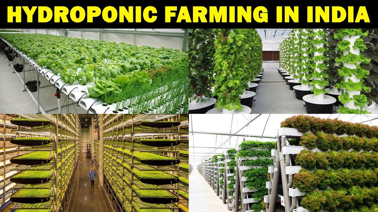 HYDROPNIC FARMING IN INDIA | Soilless farming at Home | Vertical Farming | Terrace Farming / Garden