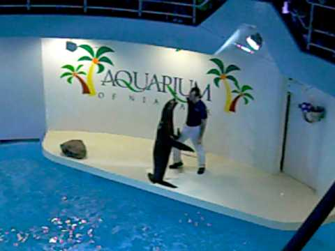 Aquarium Of Niagara Falls Ny Sea Lion Youtube
