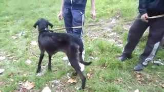 Сахарка-две собаки,одна с переломом позвоночника,вторая с истощением.