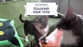эксперимент cat chow кошачий язык тела