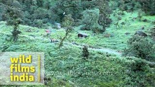 Procession of Nanda Devi Raj Jat Yatra passes through Sutol Village