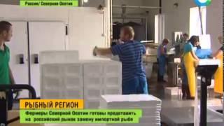 Фермери Північної Осетії запропонували заміну імпортної риби