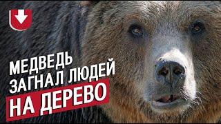 Медведь загнал людей на дерево в России