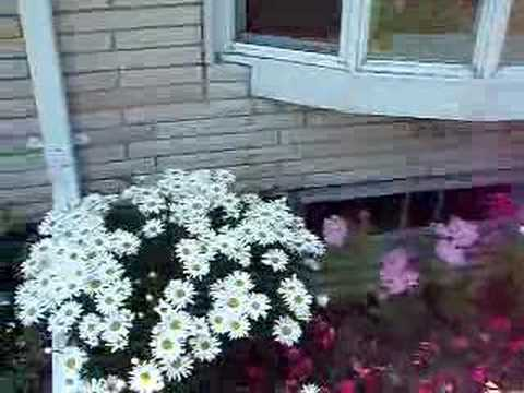 Jardineria en Casa