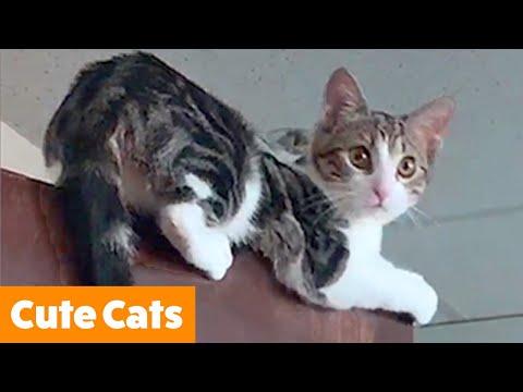 Silliest Cute Cats   Funny Pet Videos