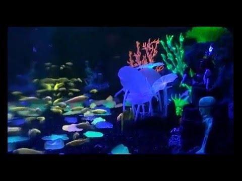 Как сделать сетку на дно аквариума в котором будут метать икру .