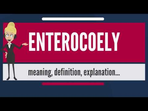 What is ENTEROCOELY? What does ENTEROCOELY mean? ENTEROCOELY