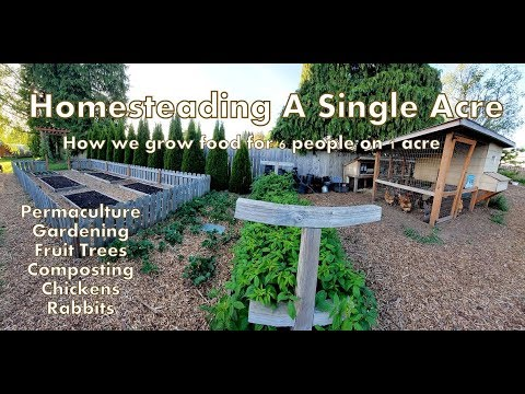 updated-walk-through-of-our-1-acre-homestead---how-we-farm-a-single-acre