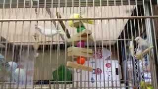 Жизнь в США. Зоомагазин. Кошки, птицы.(Зоомагазин в Аризоне. Цены на кошек, попугаев, корм., 2014-09-08T03:07:11.000Z)