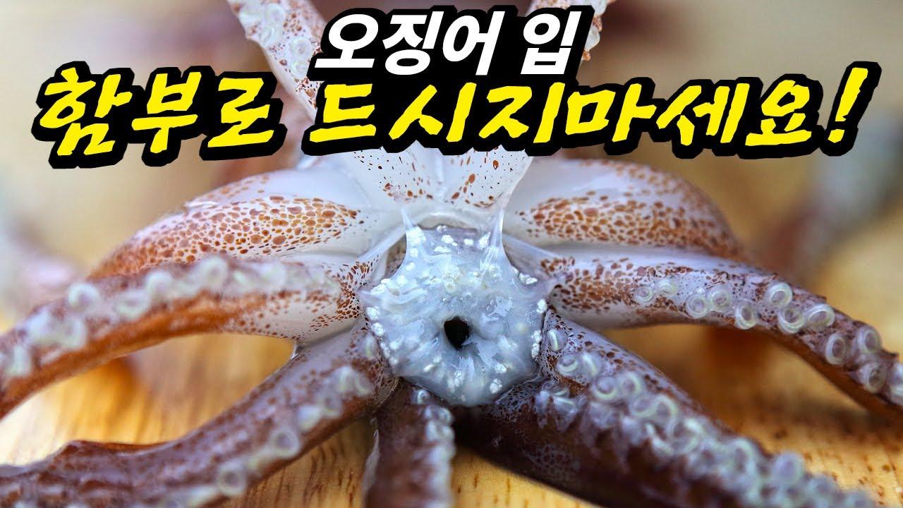 기생충보다 더 위험한 오징어 정포를 아시나요?