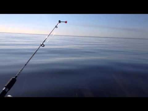 ловля плотвы на заливе финском заливе