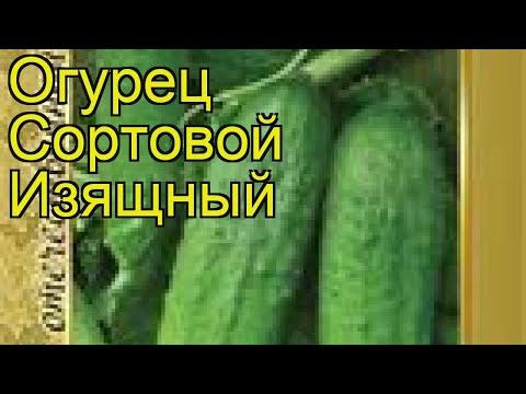Огурец сортовой Изящный. Краткий обзор, описание характеристик, где купить семена | сортовой | описание | краткий | изящный | огурец | izyashchnyy | сорто | обзор