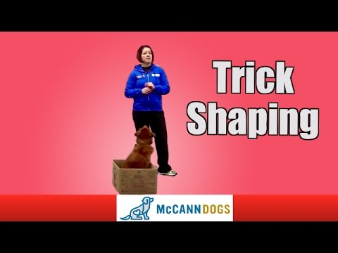 Shaping Dog Tricks
