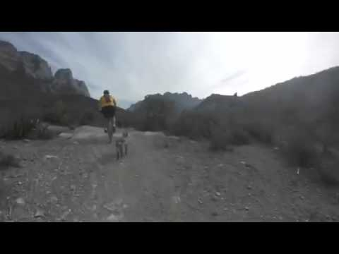 Mountain biking with a very fast 8 month old female Blue Heeler