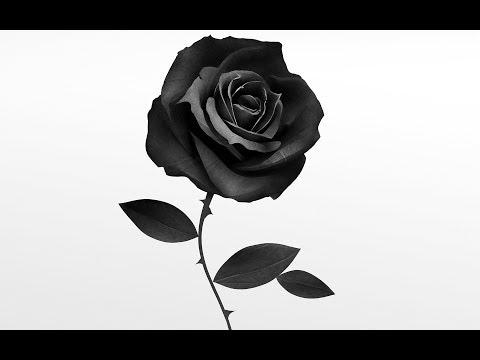 Baka Brigade // White roses