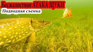 РЫБАЛКА АТАКА ЩУКИ ЖИВЦА НА ЖЕРЛИЦЫ Зимняя рыбалка 2019 2020 подводная съемка Декабрь