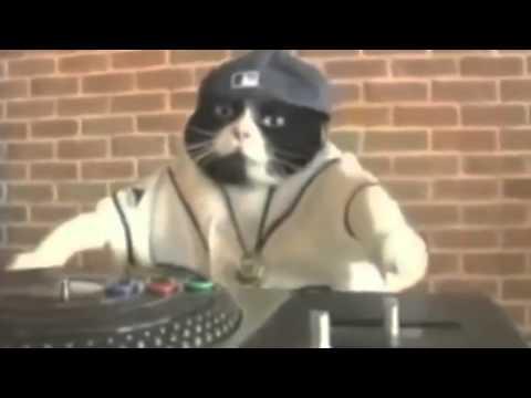 Chats Qui Dansent 2016 | YouTube | Video Fun