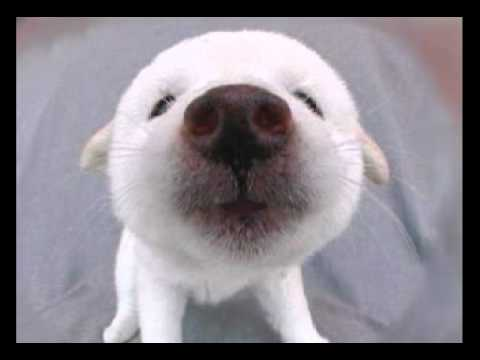 Happy Birthday To You Cute Little Puff The Furball Puppy Sings His Very Own Funny Version Of