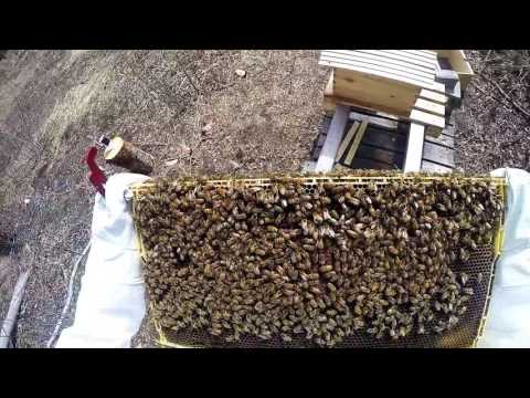 3 Week Hive Check. Beginner Beekeeping Vlog 2016