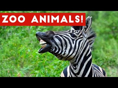 The Funniest Zoo Animals Home Video Bloopers of 2017 Weekly Compilation   Funny Pet Videos