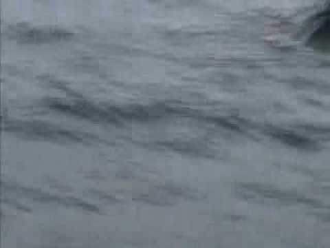 Commercial Fishing Boat Sinking / Rescue In Alaska