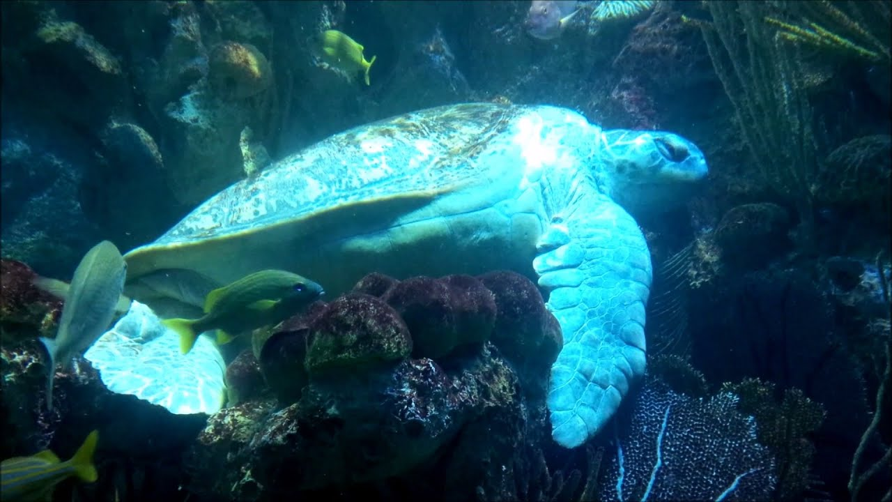 Turtles sharks sting rays and fish in the large main for Fish on main