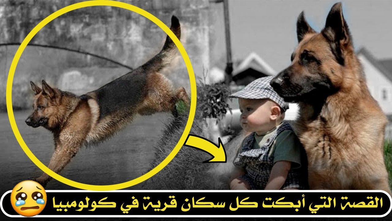 أطلقوا سراح الكلب للبحث عن طفل ضائع لن تتخيل ماذا وقع في الأخير