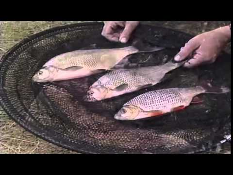 Go Fishing - John Wilson - Fishing For Roach