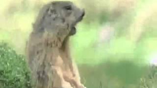 Офигенный ряд приколов про животных.mp4