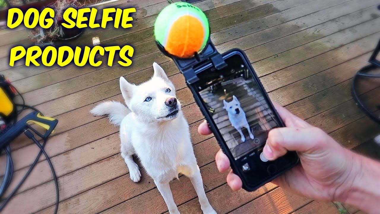 5 Dog Selfie Products