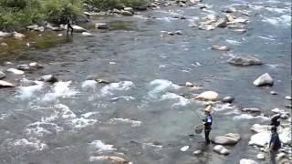 解禁前に行われた付知川の生育調査を妻Hisaが撮影!