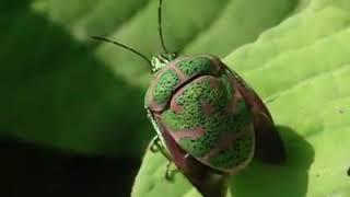 Трансформация крыльев насекомых при взлёте .