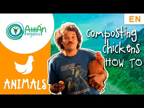 Composting Chickens: How to design and manage a composting chicken house (FUN)