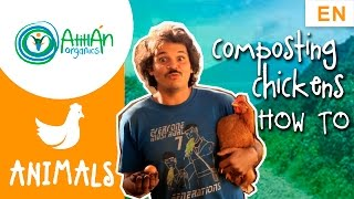 Composting Chickens: Chicken house design and management (FUN)