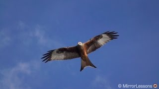A short video showing birds in flight made with the Sony RX10 II in...