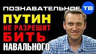 Почему Путин не разрешит Золотову бить Навального? (Познавательное ТВ, Артём Войтенков)