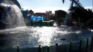 Dolphin Show at Sea World, San Diego, California, USA :: Dec 2011 :: Part 3 by Arun Kumar B